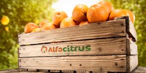 AlfaCitrus