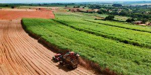 Descubra a diferença entre Arrendamento Rural e Parceria Agrícola